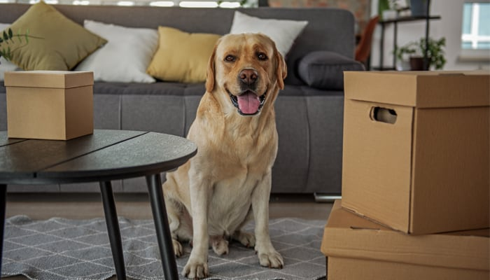 Landlords and Pets: Tenancy Agreement Amends
